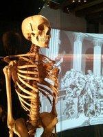 Musme: il Museo della medicina Padovana